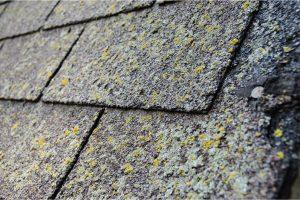 Gloeocapsa Magma: The Dark Side of Asphalt Shingle Roofs